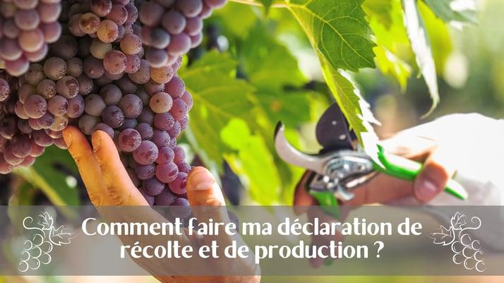 Comment faire ma déclaration de récolte et de production ?