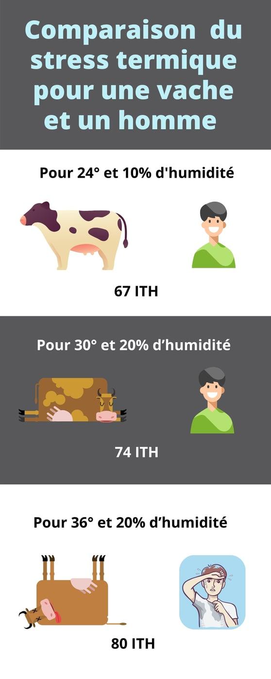 comparaison du stress thermique entre une vache et un homme