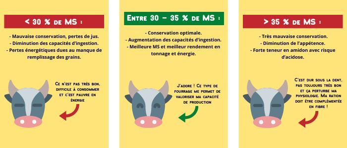 Maïs ensilage : les 5 étapes pour une ration de qualité