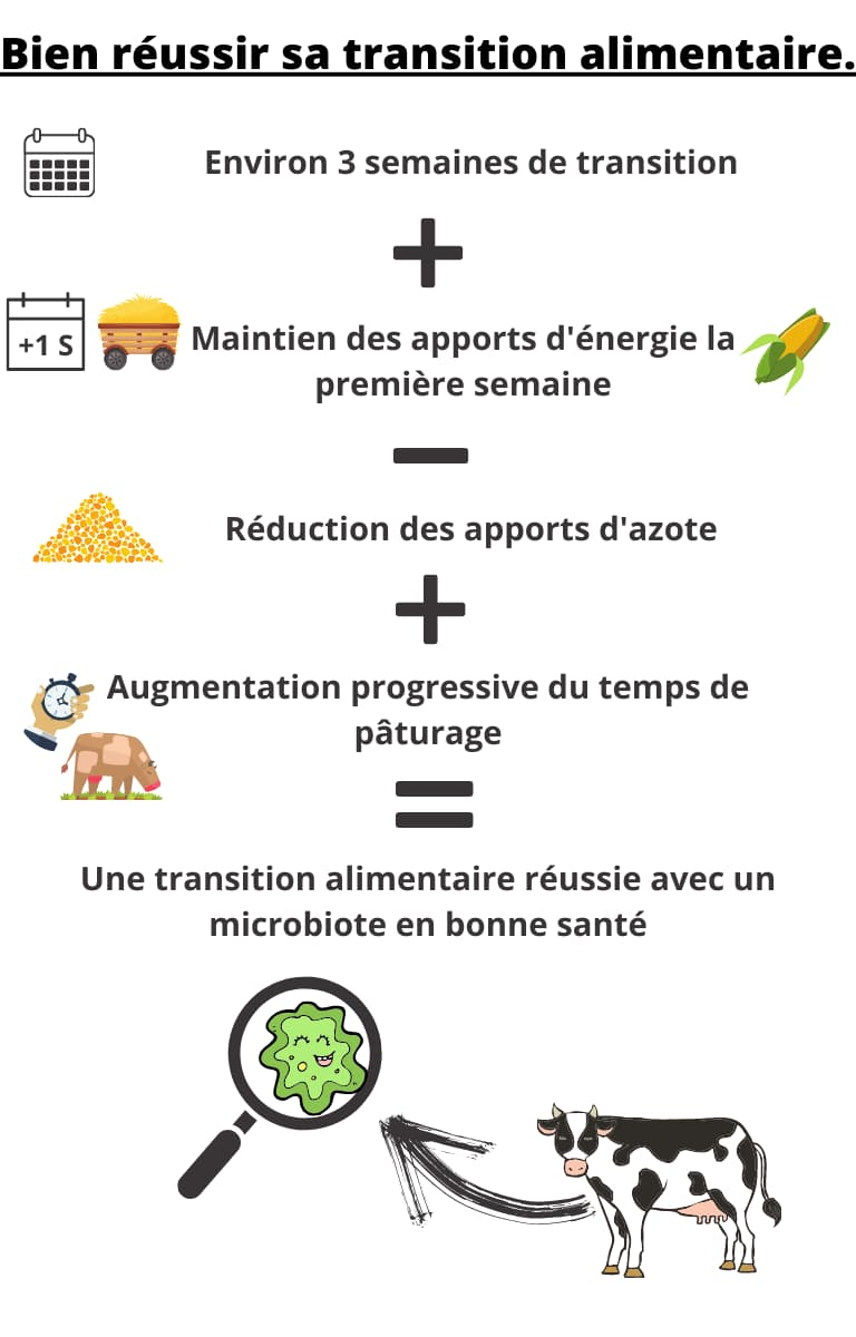 Bien reussir sa transition alimentaire version mobile