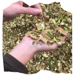 Contrôle au silo du bon éclatage des grains. Grain bien éclaté = amidon mieux digéré !