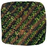 ISAGRI - 1920 - Irrigation Betteraves