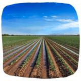 ISAGRI - 1920 - Irrigation Pommes de terre