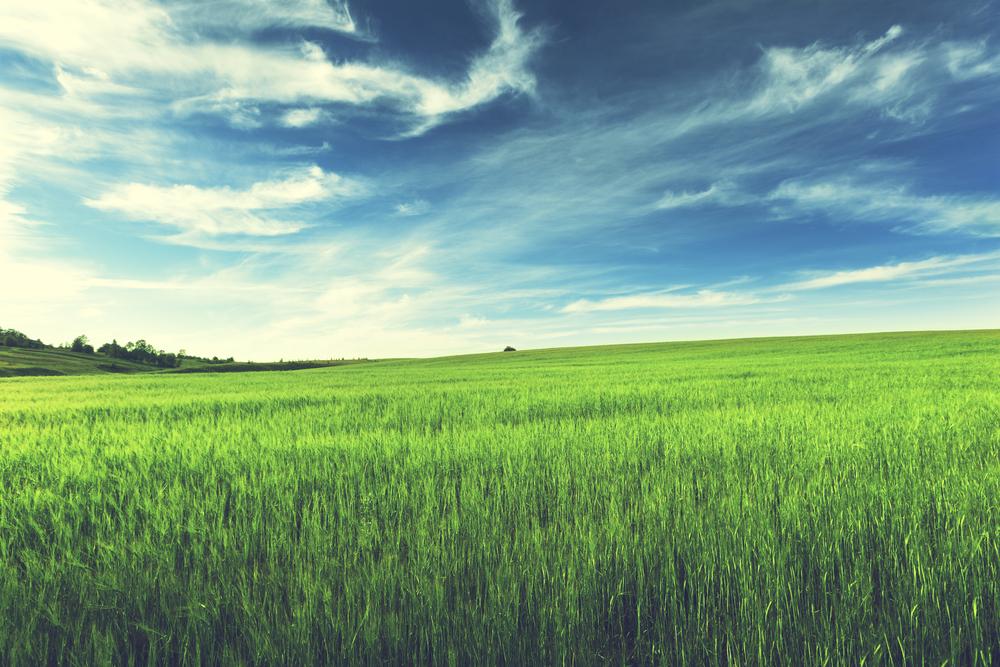 Champs d'un agriculteur