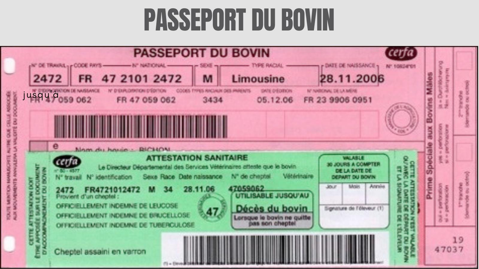 Passeport du bovin