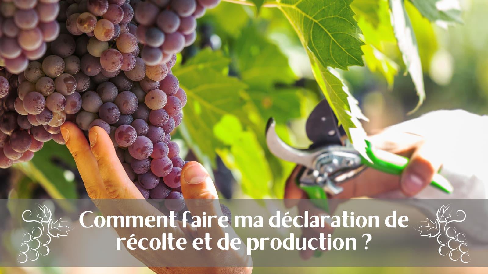Déclaration de récolte et de production