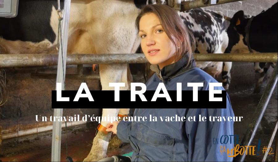 La traite : un travail d'équipe  entre la vache et le trayeur