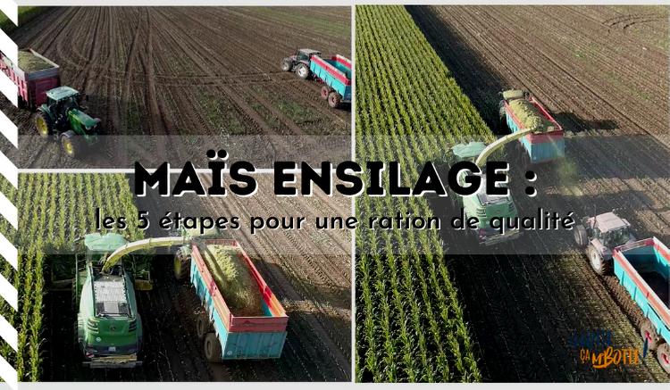 Maïs ensilage : les 5 étapes pour une ration de qualité  🌽