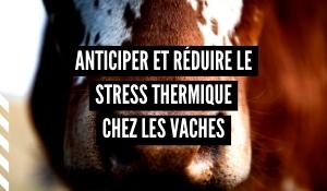 ISAGRI_0720_blog_Vignette Article Stress Thermique