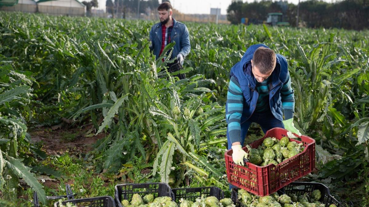 Employeurs de main d'oeuvre agricole : voici la nouvelle convention collective nationale. Ce que cela change pour vous : fiches de paie, salaire, classification des employés. Découvrez les changements en matière de paie.